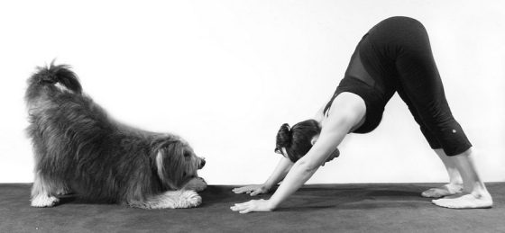yoga - downward dog